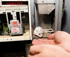 hamster_automat
